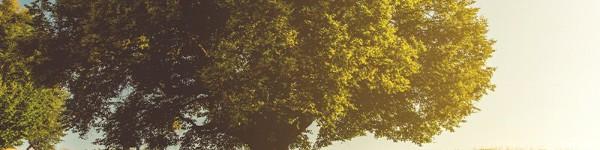Да се посади дръвче при раждане оригинален подарък за кръщене на дете